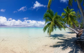 summer, tropical, palm trees, sea, landscape, nature