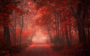 shrubs, trees, red, mist, road, fall