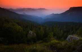 amber, mountain, forest, nature, landscape, sunrise