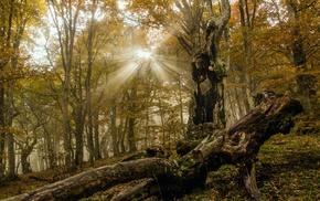 forest, sunlight