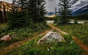 lake, path, forest, landscape, pine trees