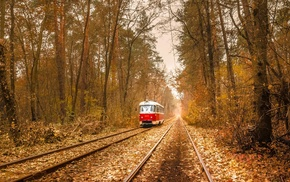 tram, vehicle, wire, branch, rail yard, nature