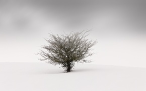 landscape, trees, minimalism, nature, winter, mist