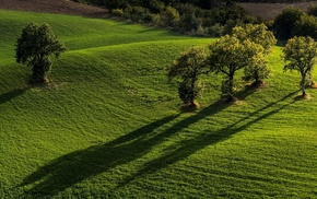 forest, nature, minimalism, hill, simple, shadow