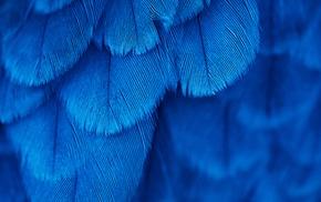 blue, macro, feathers