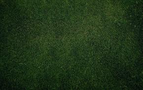 plains, grass, nature