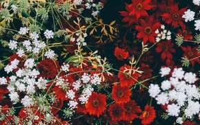 red flowers, flowers
