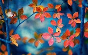 fall, leaves, depth of field, branch, nature, trees