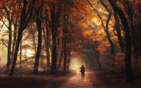 dirt road, atmosphere, orange, sunlight, shrubs, fall
