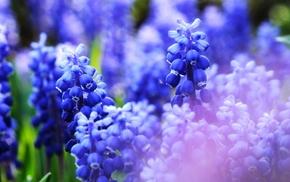 macro, nature, flowers, blue, closeup