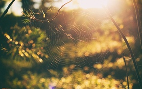 bokeh, trees, spiderwebs, forest, sunset, nature