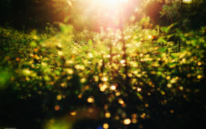 nature, sunset, forest, depth of field, life, bokeh