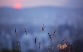 top view, sunset, plants, mountain