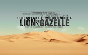 lion, desert, quote