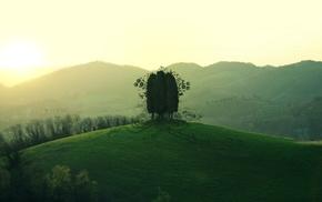 trees, mountain, grass