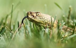 grass, snake