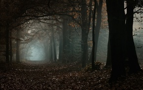daylight, atmosphere, leaves, morning, fall, nature