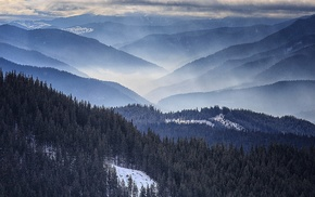 nature, forest, mist, landscape, Romania, mountain