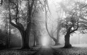 morning, sunrise, leaves, monochrome, Germany, nature
