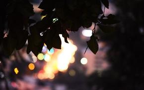 top view, bokeh, city, leaves