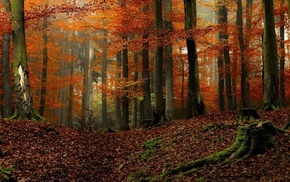 colorful, fall, nature, landscape, trees, forest