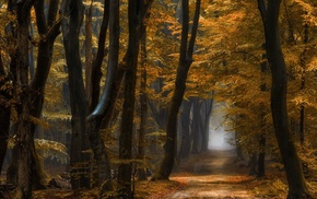 fall, forest, daylight, trees, yellow, leaves
