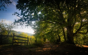 sunlight, dirt road, trees, shadow, fence, nature