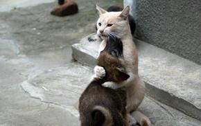 hugging, animals, car, dog