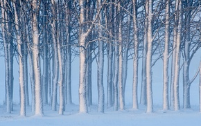 winter, snow, landscape, mist, trees, nature