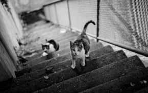 cat, monochrome