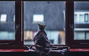 animals, window, cat, Felicity Berkleef