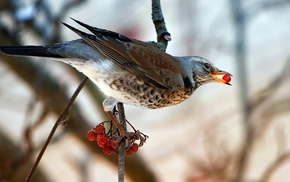 birds, sparrows, branch, animals, food