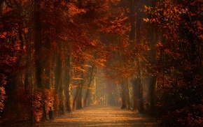 sunrise, Spain, path, amber, trees, fall