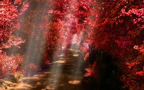 dirt road, red, leaves, fall, shrubs, path