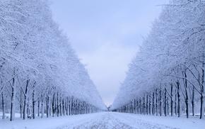 landscape, nature, trees, snow, winter
