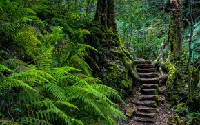 ferns, forest, stairs
