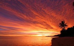 trees, silhouette, landscape, beach, sea