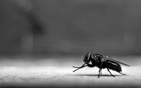 insect, Fly, diptera