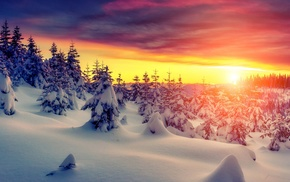 sunset, snow, landscape, trees