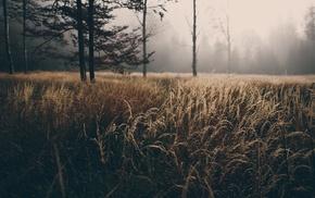 field, mist, trees
