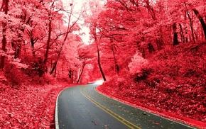 pink, nature, road