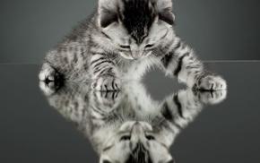kittens, nature, reflection, cat