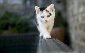kittens, cat