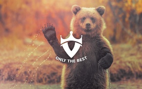 water, bears, wildlife, nature