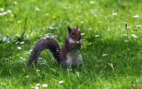 nature, squirrel, grass