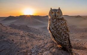 nature, owl