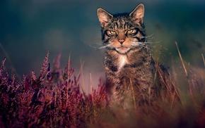 nature, cat