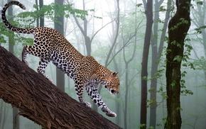 nature, leopard