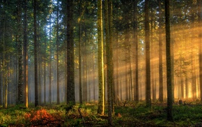 landscape, sun rays, forest, grass, trees, sunlight