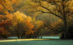 morning, fall, Czech Republic, frost, trees, park